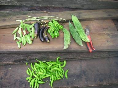 収穫夏野菜12_09_15