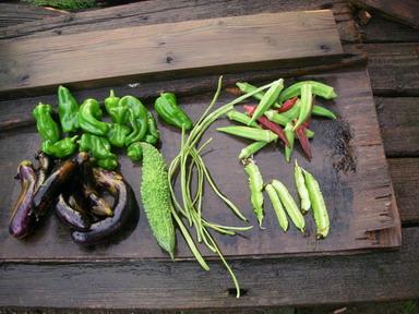 収穫12_09_18