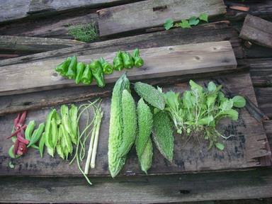 収穫12_09_20