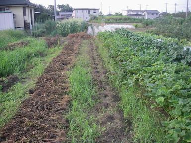 だだ茶豆跡地12_09_22