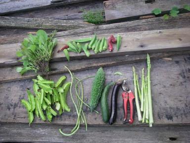収穫12_09_22