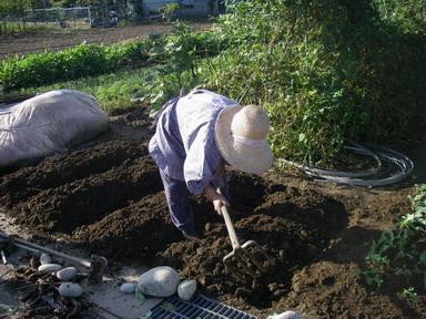 玉ねぎ苗床12_09_23