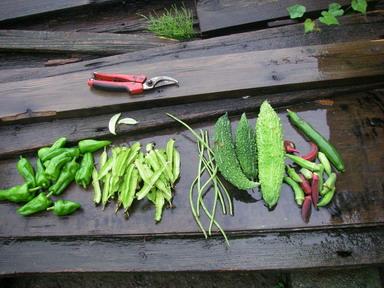 収穫12_09_23