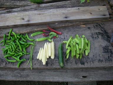 収穫12_09_25