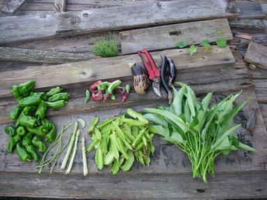 収穫12_09_26