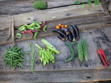 収穫12_09_27