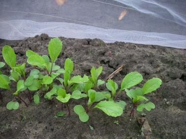 日野菜12_09_27
