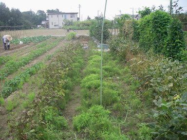 枝豆12_09_29