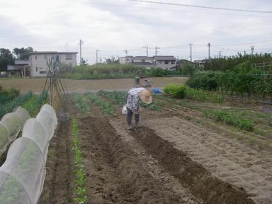 母1畝作り12_09_29