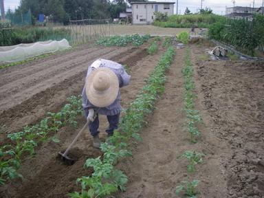 ジャガイモ土寄せ12_09_30