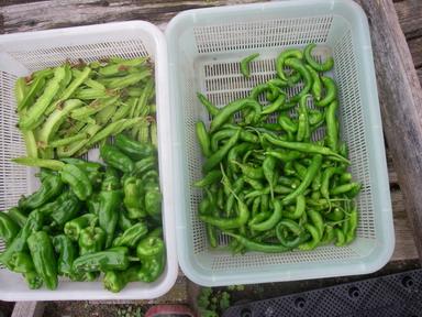 収穫2_12_09_30