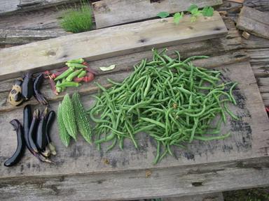 収穫12_09_30