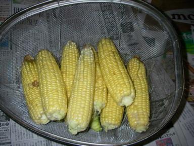 収穫スイートコーン12_10_07
