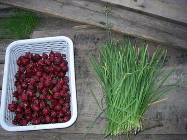 収穫12_10_08