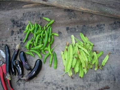 収穫12_10_09
