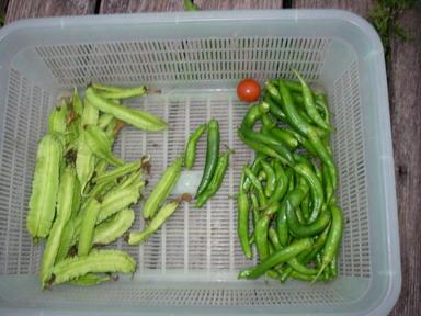 収穫3_12_10_11