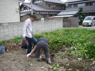 芋掘り12_10_13