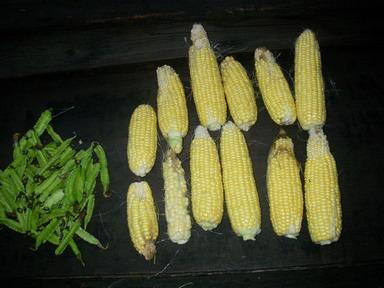 収穫12_10_18