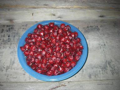 収穫ローゼル12_10_21