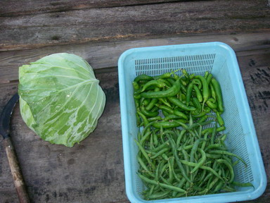 収穫12_10_30