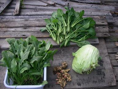 収穫菜っ葉12_11_07