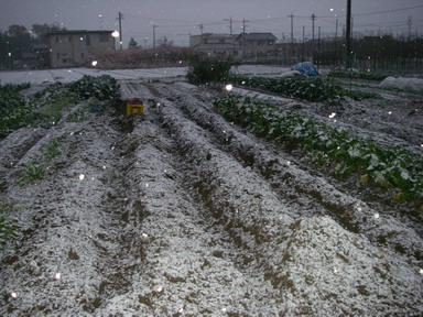 収穫完了12_12_09