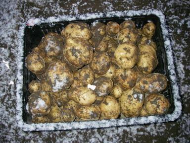 収穫デジマ12_12_09