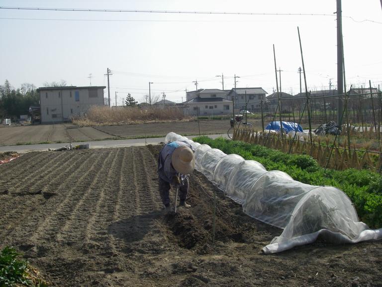ニンジン畝作り13_03_09