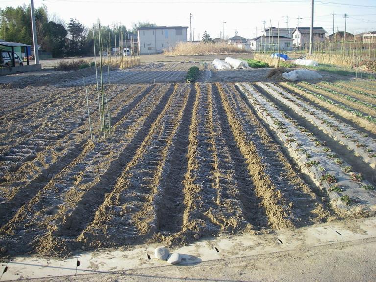 ジャガイモ畝立て13_03_12