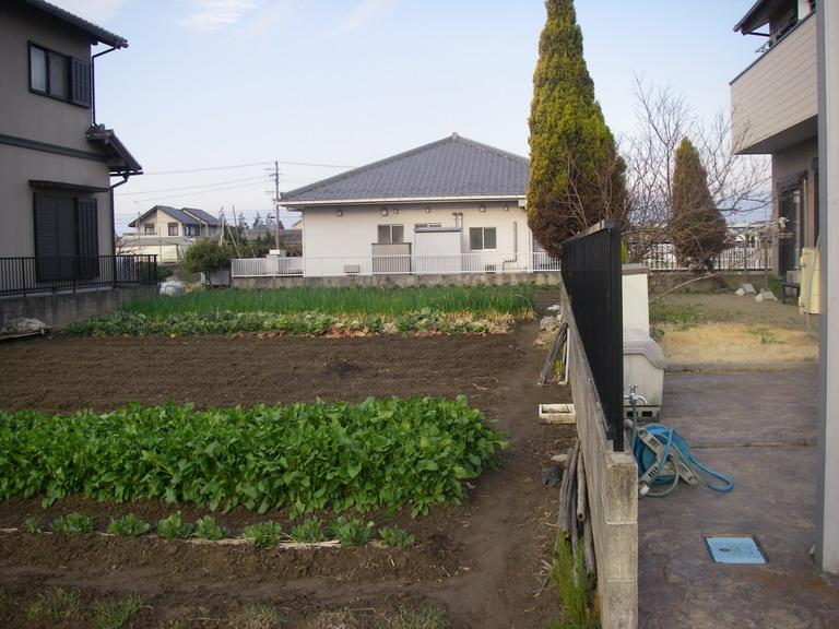 菜園№2_13_03_14