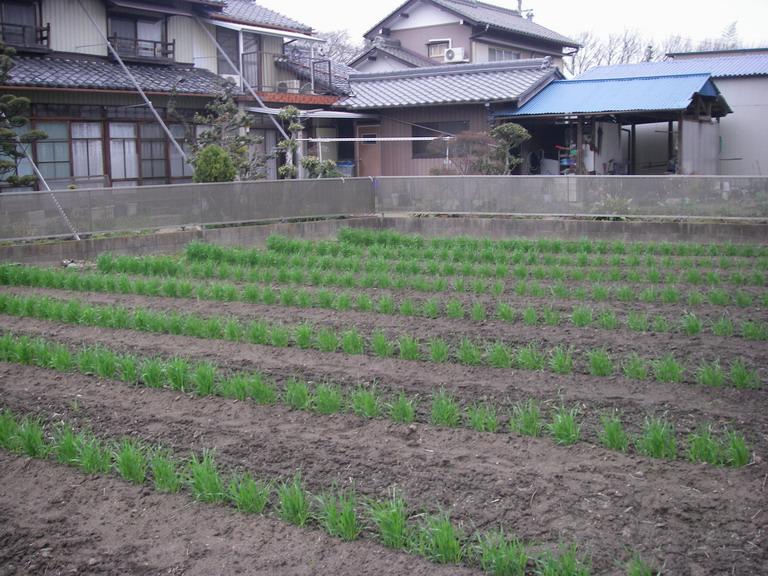 菜園№3_1_13_03_20