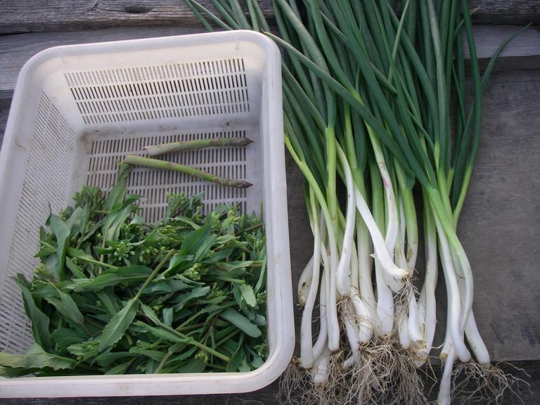 収穫13_04_05