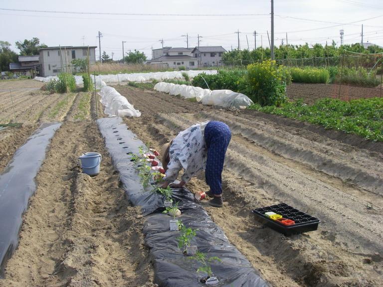 トマト植え付け13_05_04