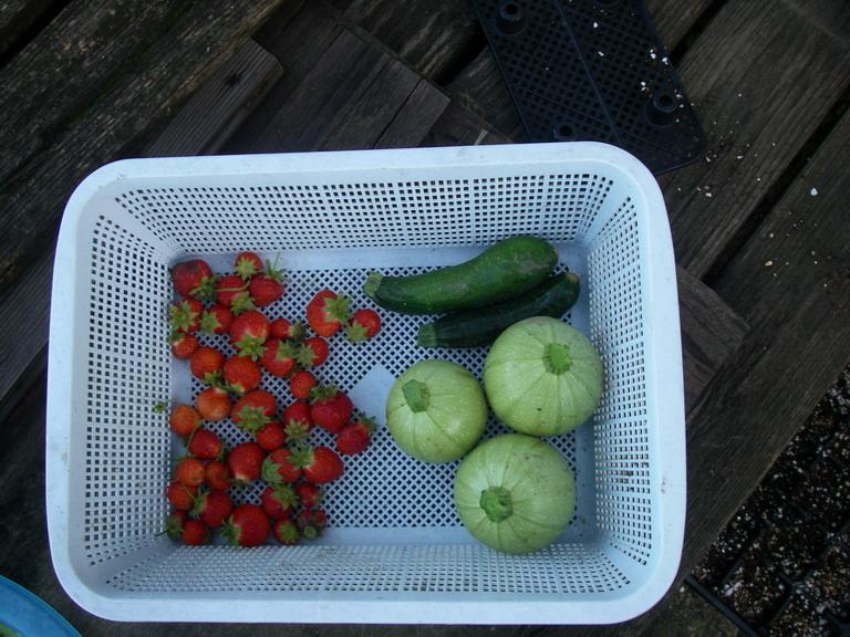 収穫イチゴ&ズッキーニ13_05_31