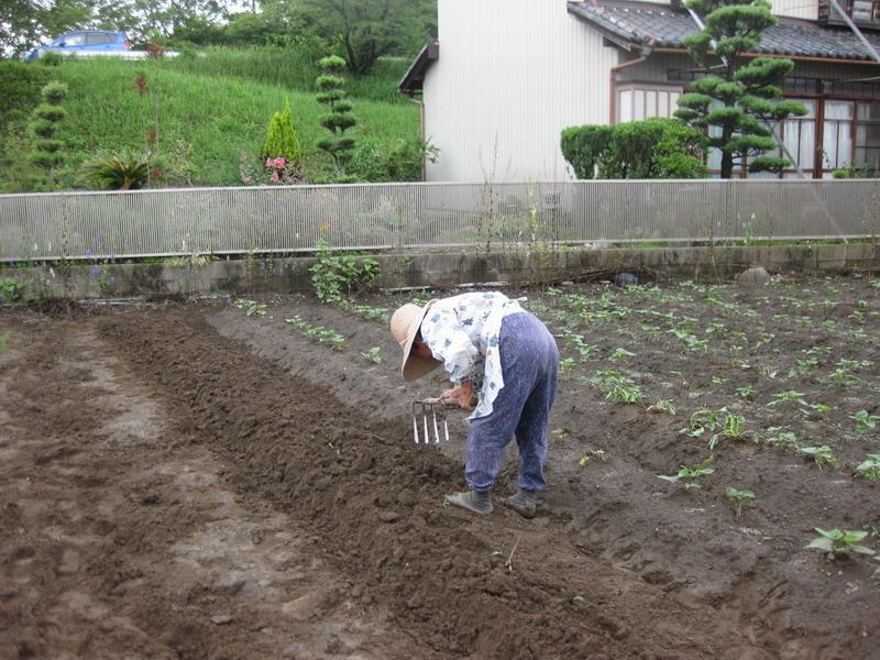 畝作り13_06_22