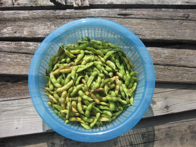 収穫昼2_13_07_07