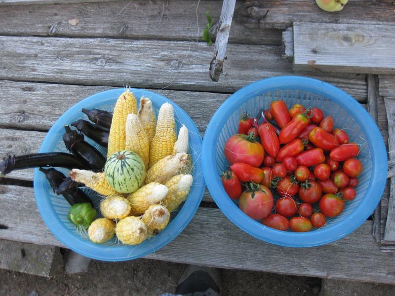 収穫2_13_07_09