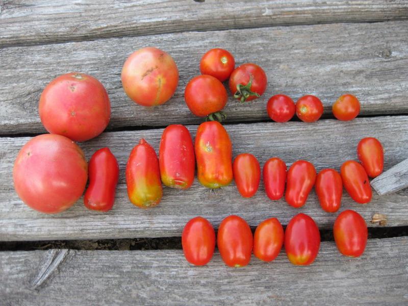 トマト6種13_07_12