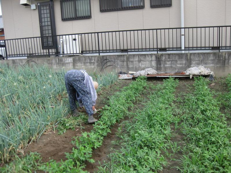菜園№213_07_15