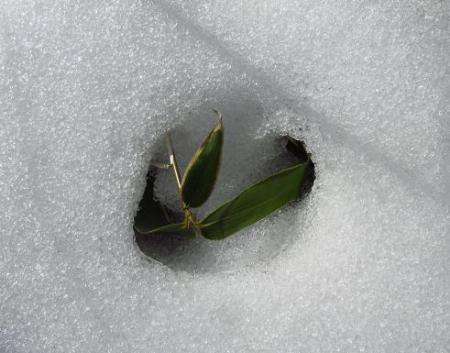 春のような天山残雪 038