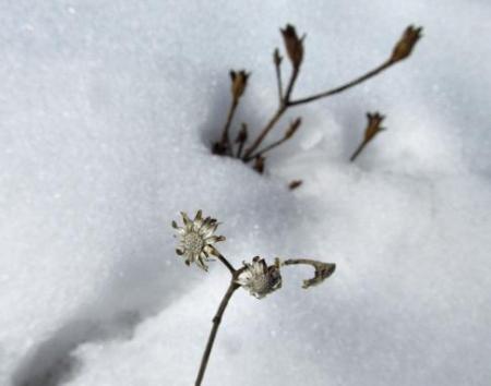春のような天山残雪 130