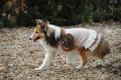 ドッグコート桜 走るんです ぱつも