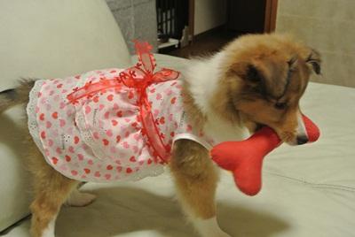 初ドレス 着せられた