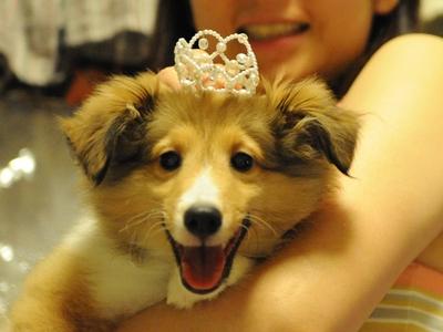 空姫3か月のお姫様