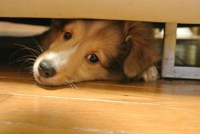 ソファーの下IN
