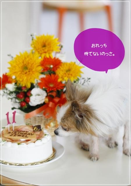 _MG_2899-20122012.jpg