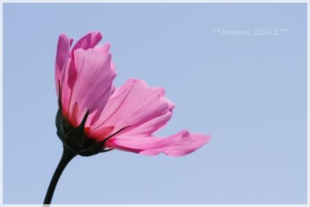 _MG_3931-2012.jpg