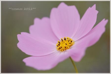 _MG_3959-2012.jpg