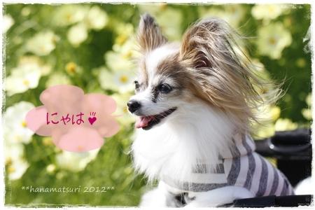 _MG_4242-2012-2012.jpg