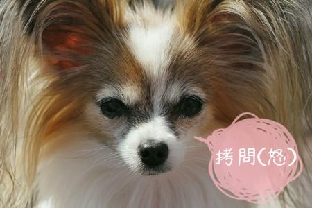 _MG_4475-2012-2012.jpg
